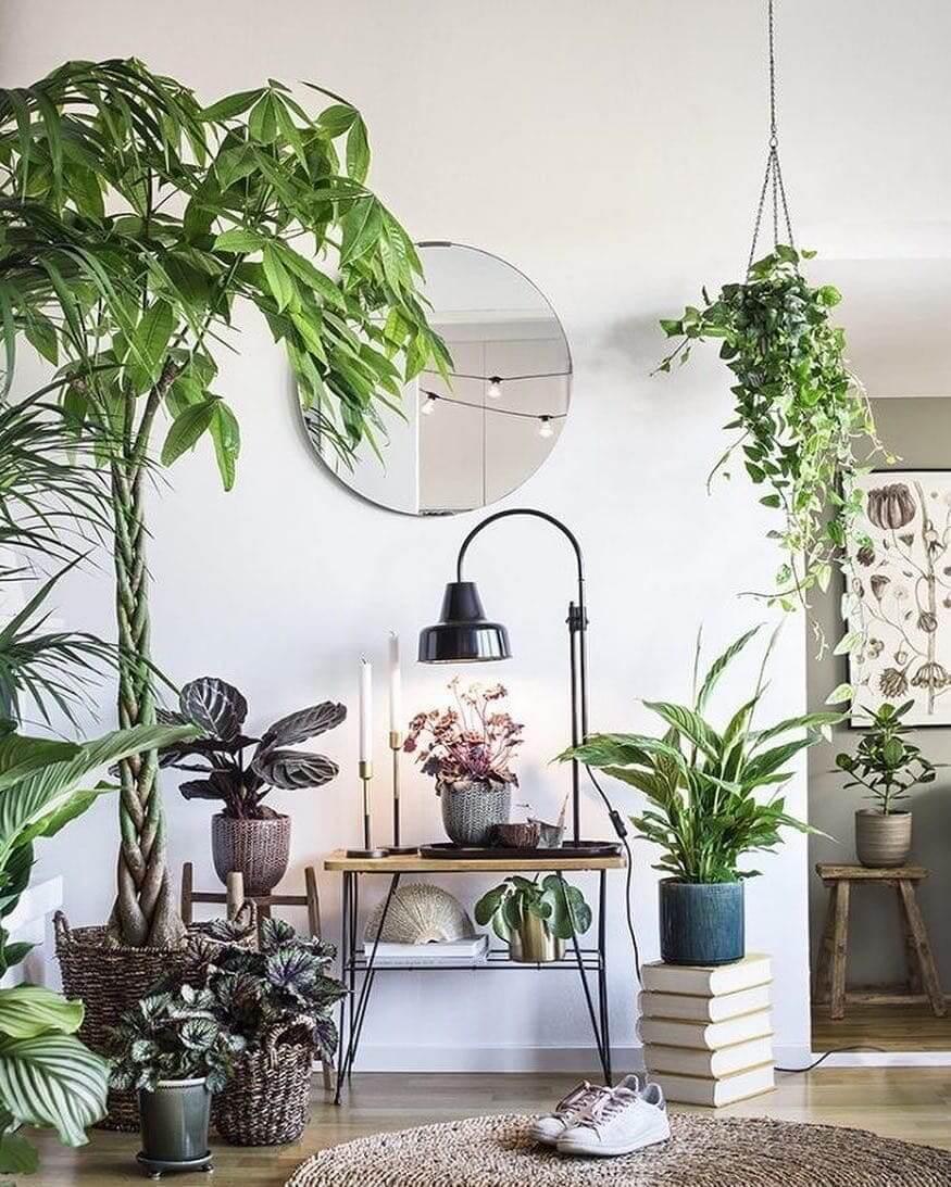 inside plants decoration - 736×736