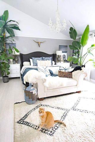 Комнатные растения как элемент декора